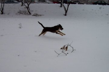 Leaping in snow
