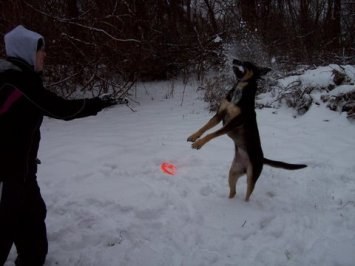 catching-snowball